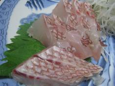 愛媛産の鯛