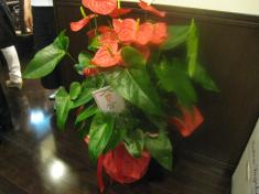 祝 開店 お花