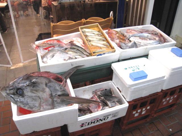 店前 お魚たち