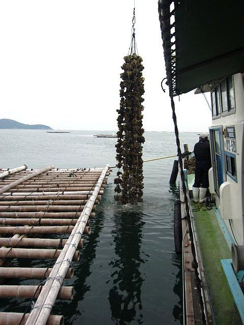 s-牡蠣棚2