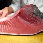 摂津市千里丘  『池上総本家のおすし』  大間のマグロの美味しさに超ウルトラビックリ!